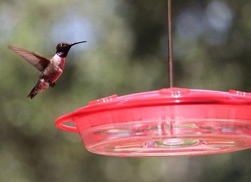 Bird Food/Water/Bath